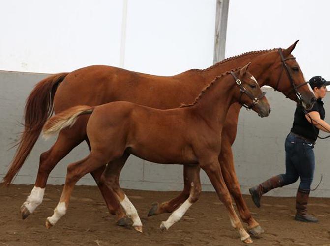 Prototype stallion x for pleasure